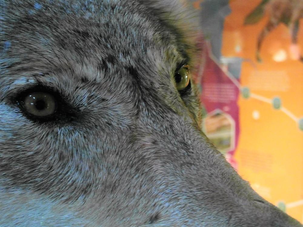 wandelwolf-foto